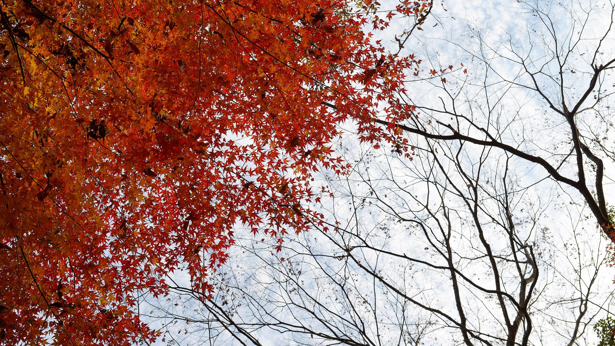 秋の奥日田で紅葉探し